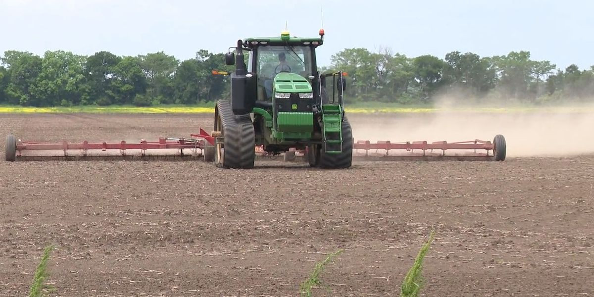 bcda712830 Experts  Arkansas farmers face most challenging planting season in over a  decade