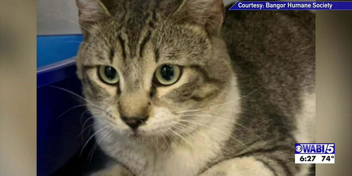 Cat that snuck aboard 1,800-plus mile flight settles into new home