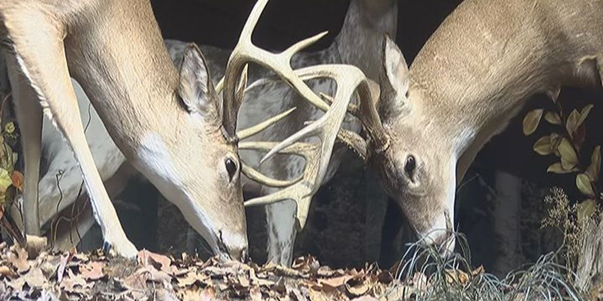 Deer forecast for hunters and drivers