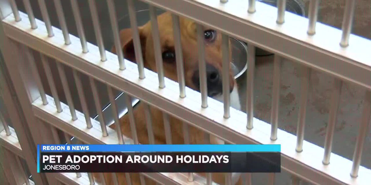 Animal control officers warn against pet adoption during holidays