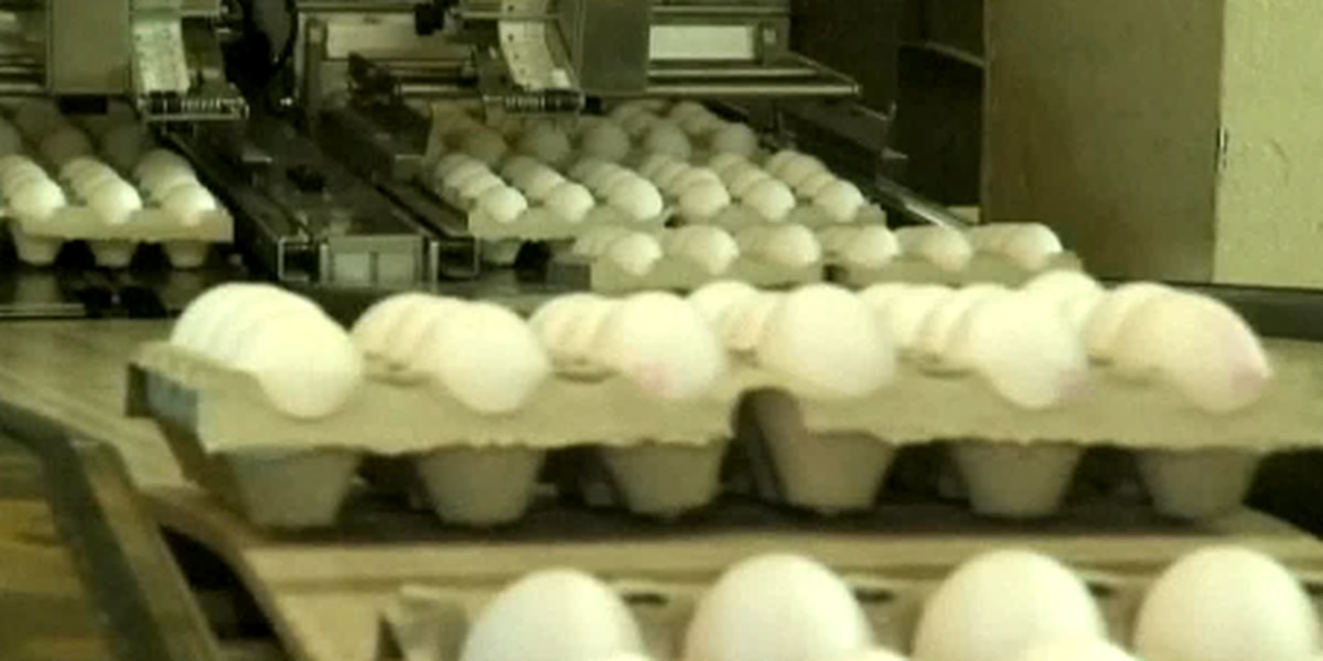 Eggs may be good for you after all, doctors say
