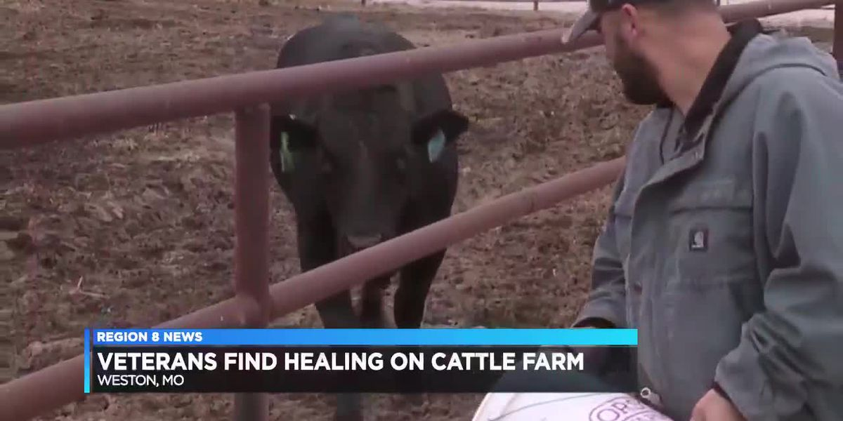 Veterans find healing on cattle farm