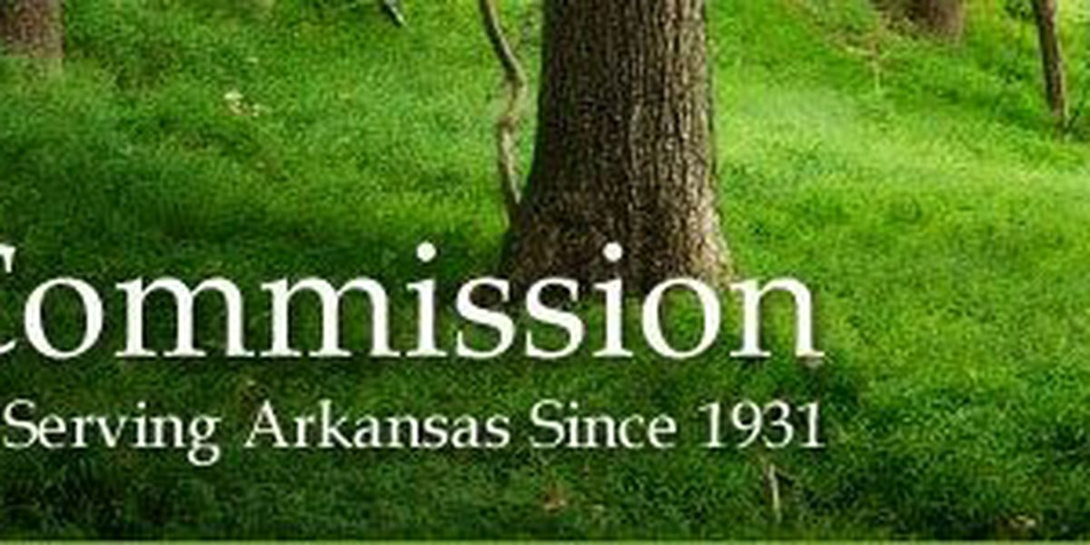 Ash trees face extinction in Arkansas due to invasive beetle