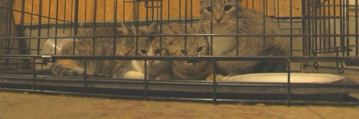 House, property overrun with cats