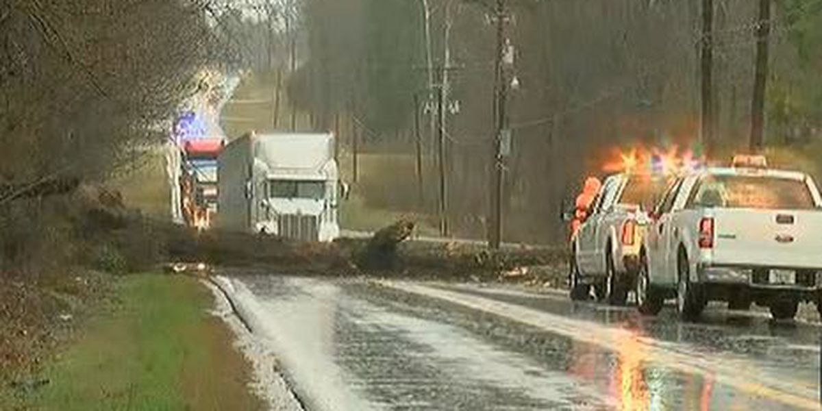Road open after downed tree, power lines caused delays