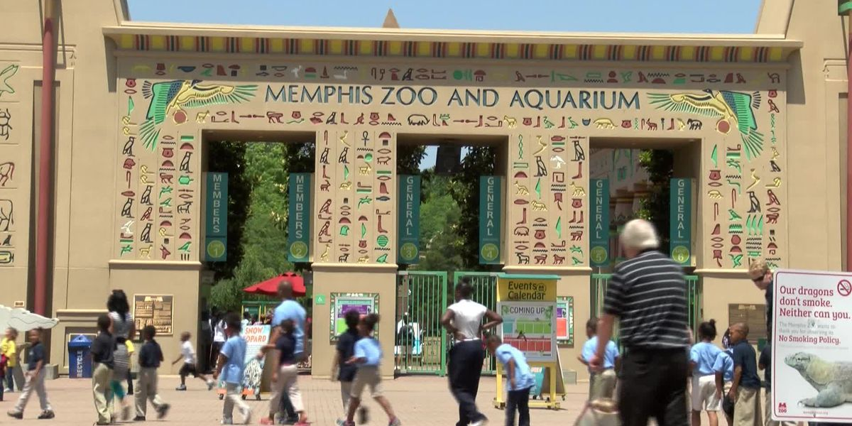 Memphis Zoo named 8th best zoo in the US in USA Today Readers' Choice poll