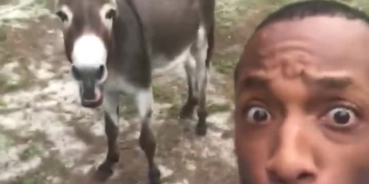 S.C. man recreates iconic 'The Lion King' intro with donkey named Nathan