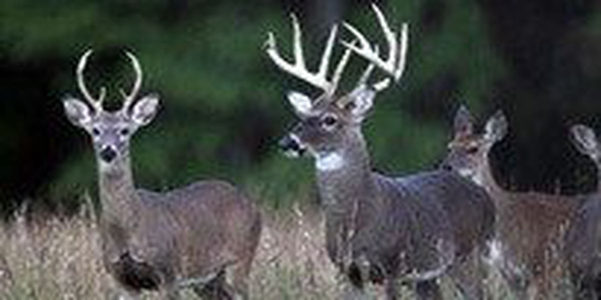 CWD regulations go into effect