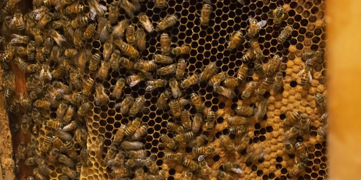 Honeybees moved from Louisville building