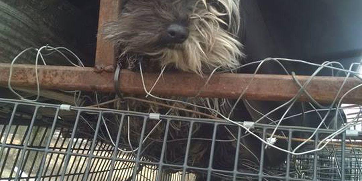 30 dogs seized from residence west of Jonesboro