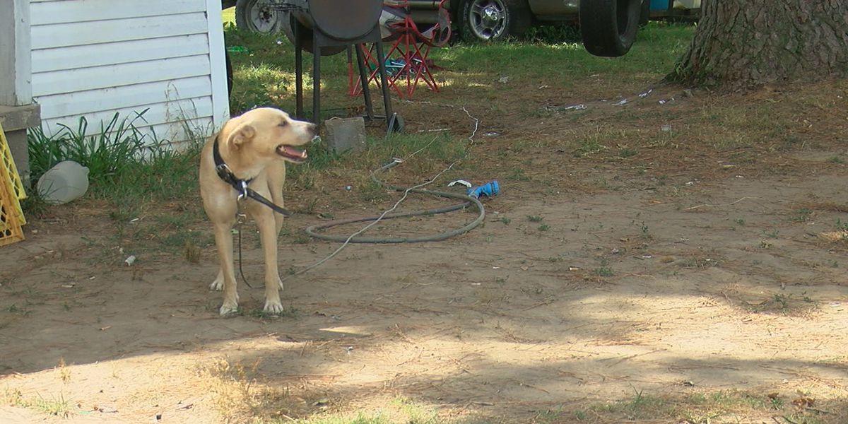 City discusses three dog ordinances
