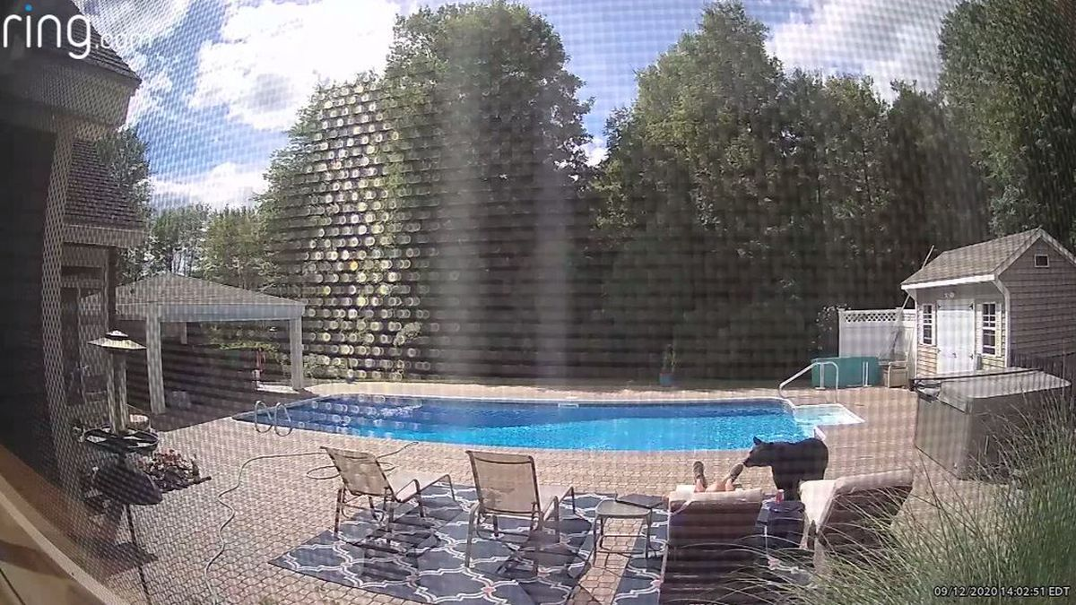 Caught on camera: Curious bear interrupts man's poolside nap
