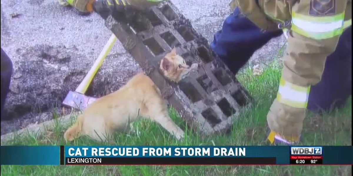 Cat recovers after getting its head stuck in a storm grate