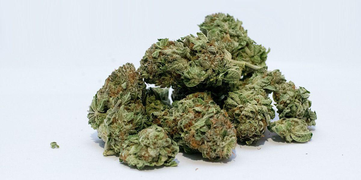Study: Missouri's marijuana supply will outpace demand