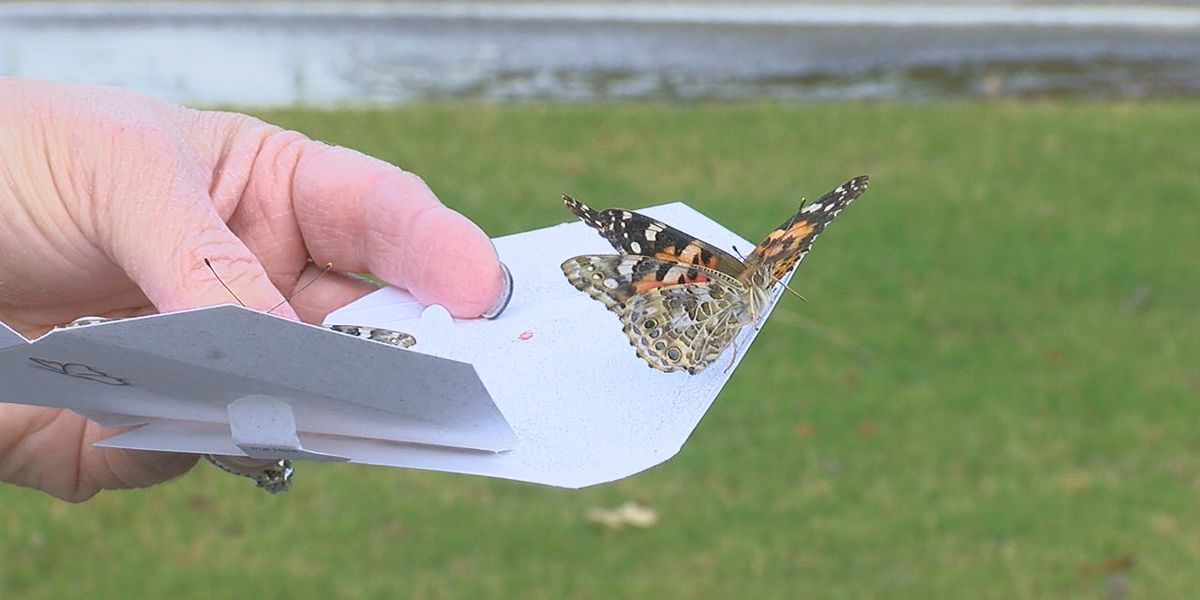 St Bernards hosts 13th annual Butterfly Release