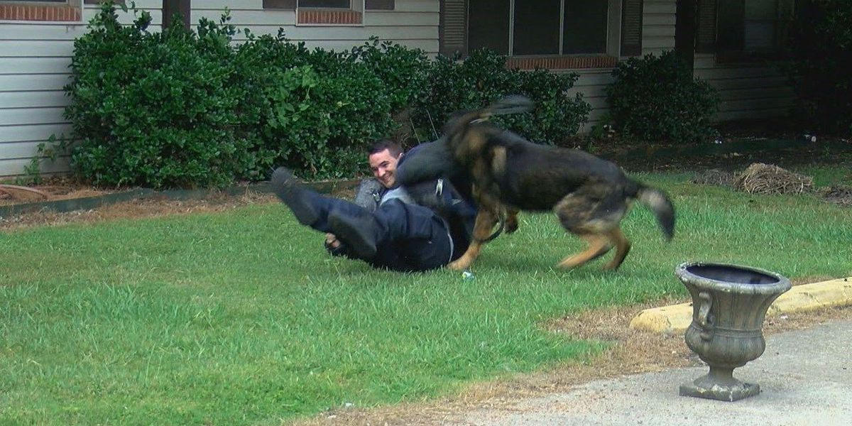 K-9 training builds invaluable support, officers say