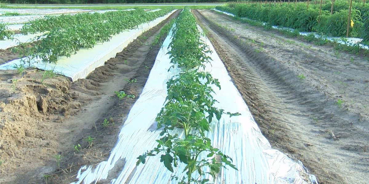 Missouri Department of Agriculture follows EPA guidance on dicamba