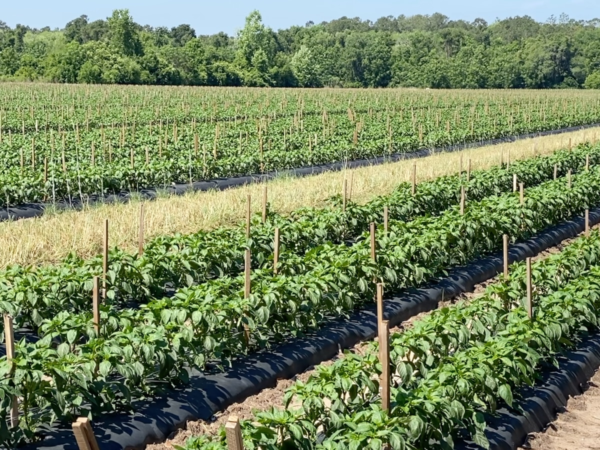 Agriculture Businesses Eligible For Sba Disaster Loans