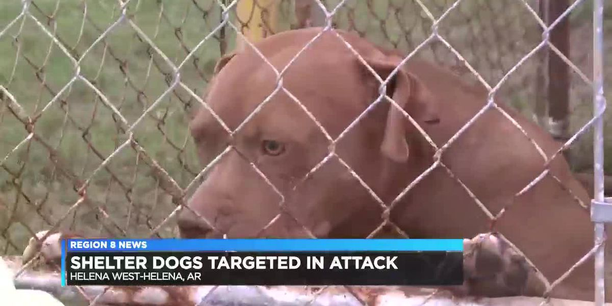 Shelter dogs targeted in attack