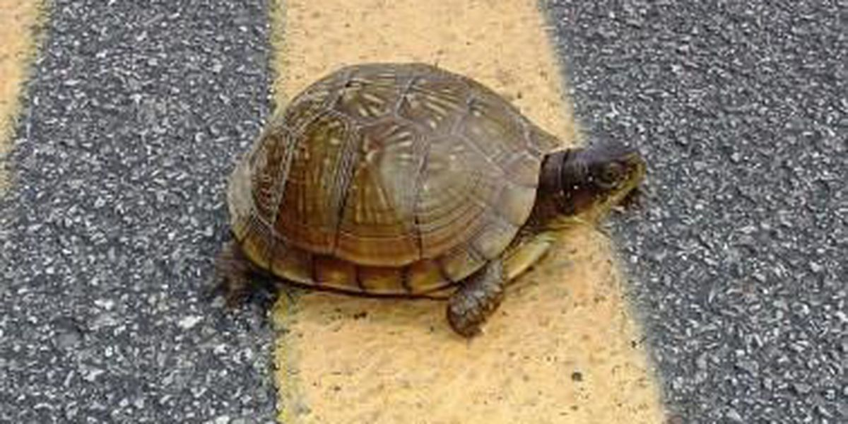 "MDC: ""Give turtles a brake"""