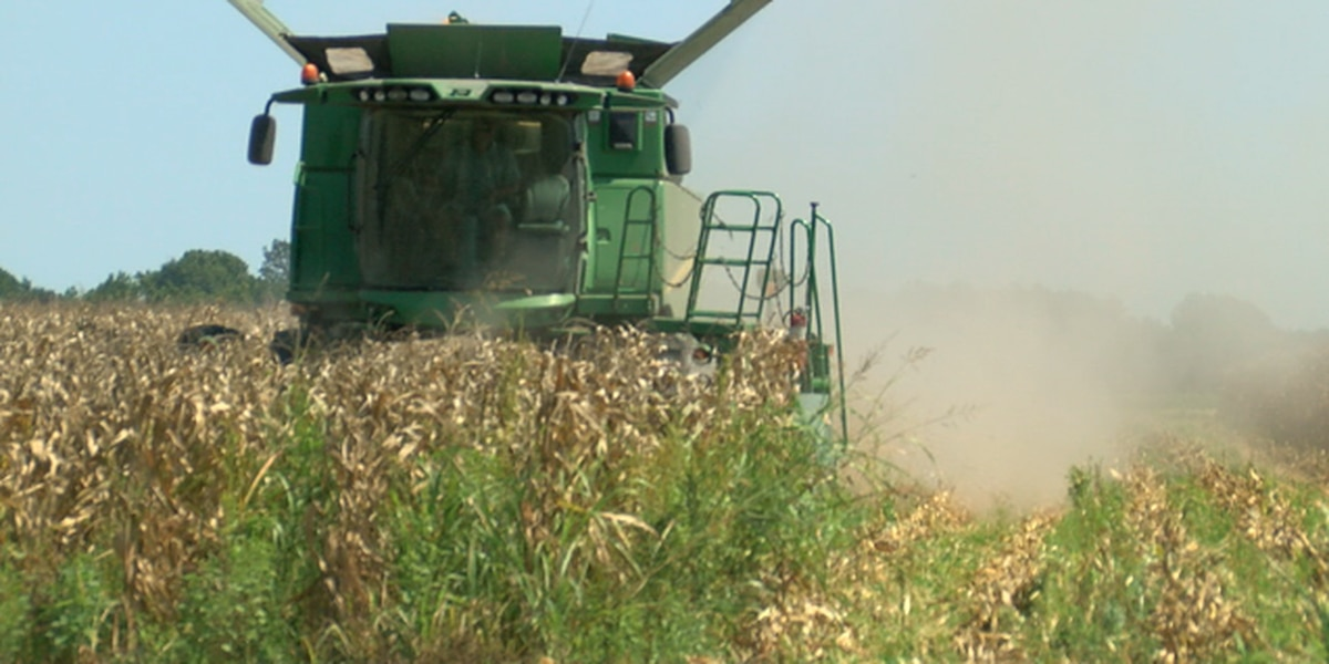 China tariff war continues, farmers feel the impact