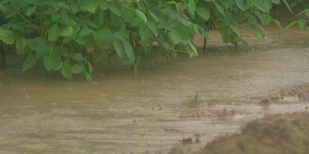 Farmers battle flooding at key time