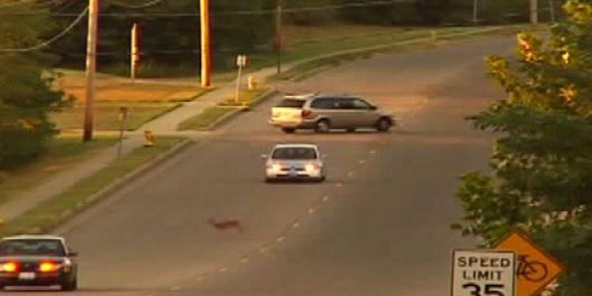Deputies raise awareness after officer's fatal deer accident