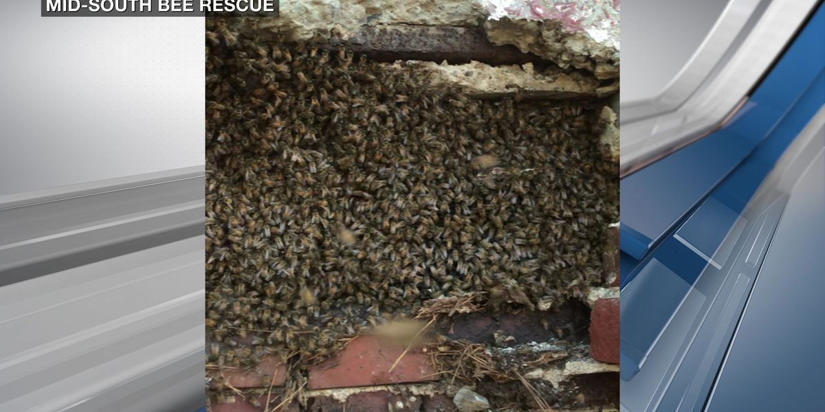 14-foot beehive removed from 100-year-old building