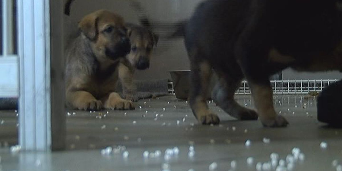 Animal Control to resume low cost vaccine clinics