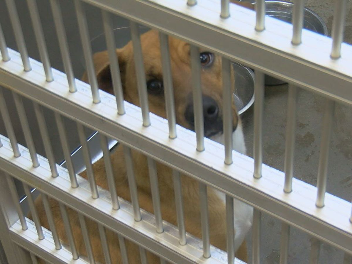 Animal control officers warn against dog adoption during holidays
