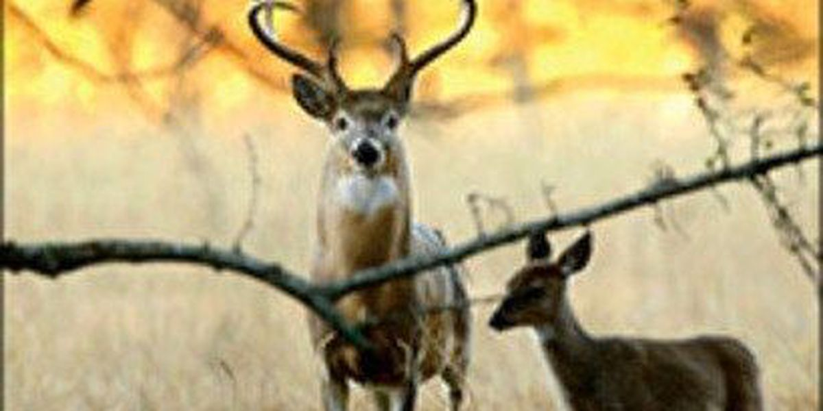 Commission to discuss CWD proposals