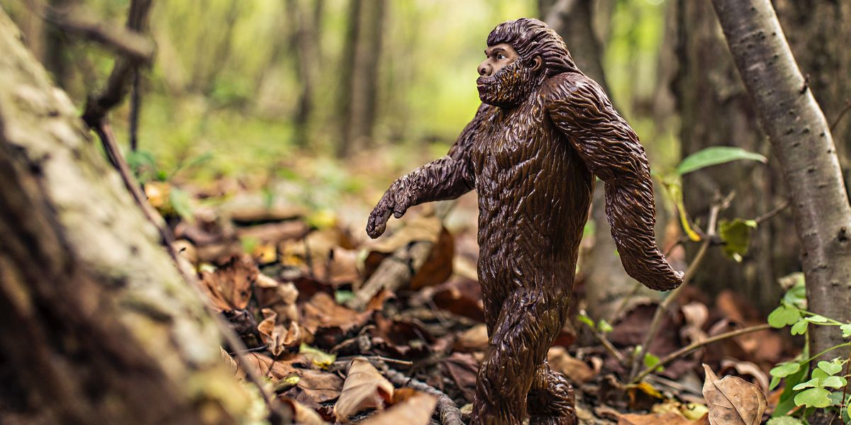 Shots fired at Mammoth Cave over an alleged bigfoot sighting