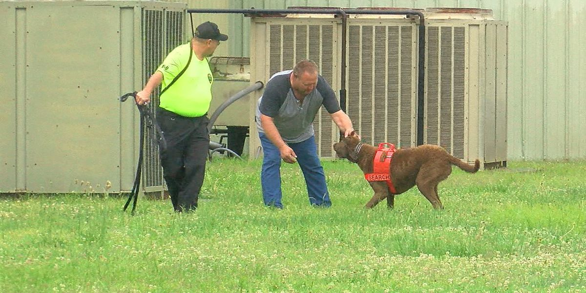 Local task force trains search and rescue dogs on own time, money