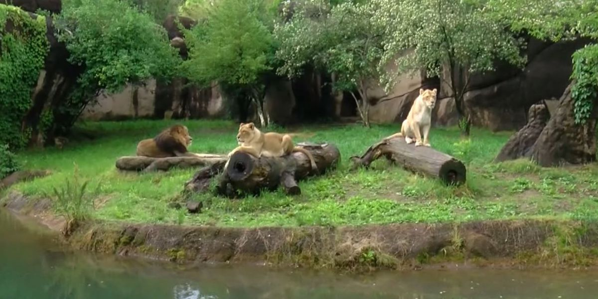 Memphis Zoo to reopen requiring all visitors to wear masks