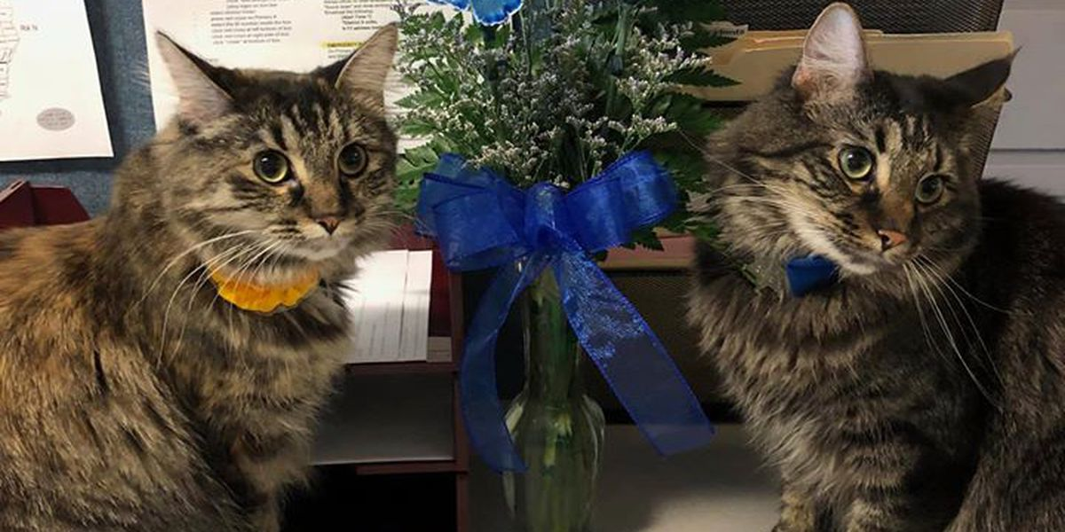 """""""Integrity. Service. Purrr-ide"""" ISP introduces therapy cats"""