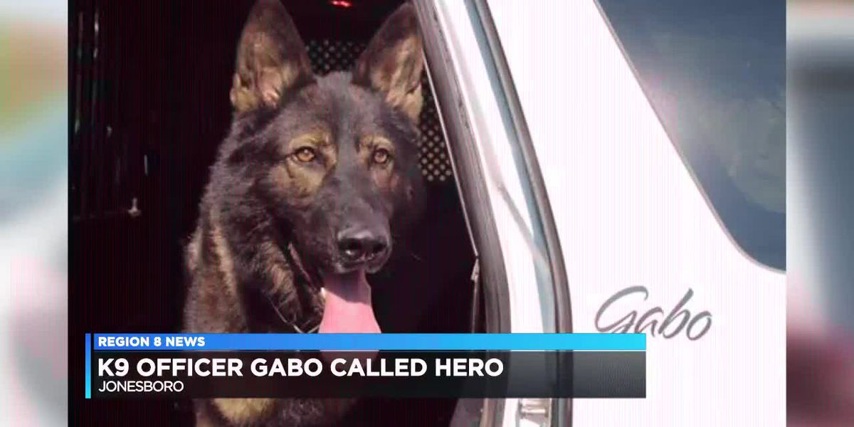 K9 Officer Gabo called a hero