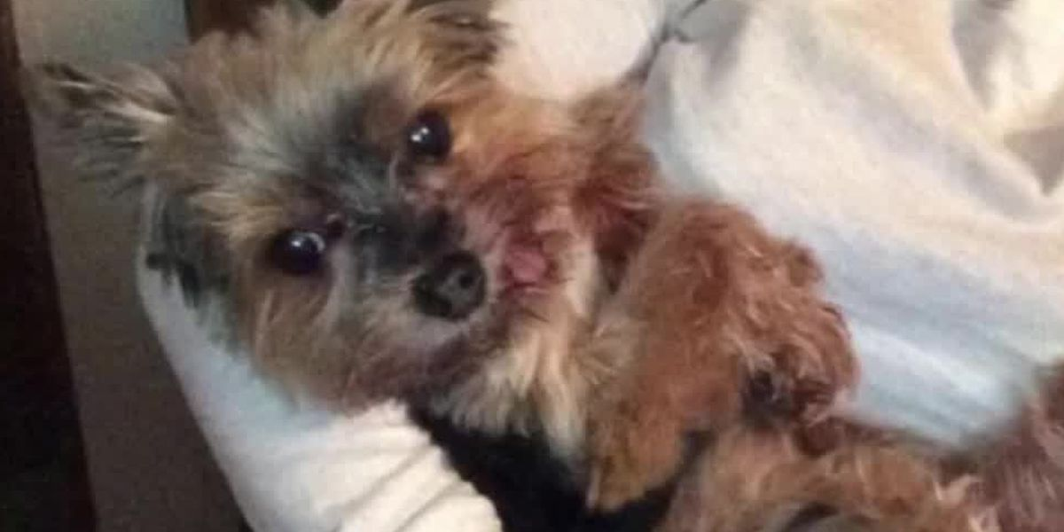 Owner of euthanized dog details incident that led to her injuries, death
