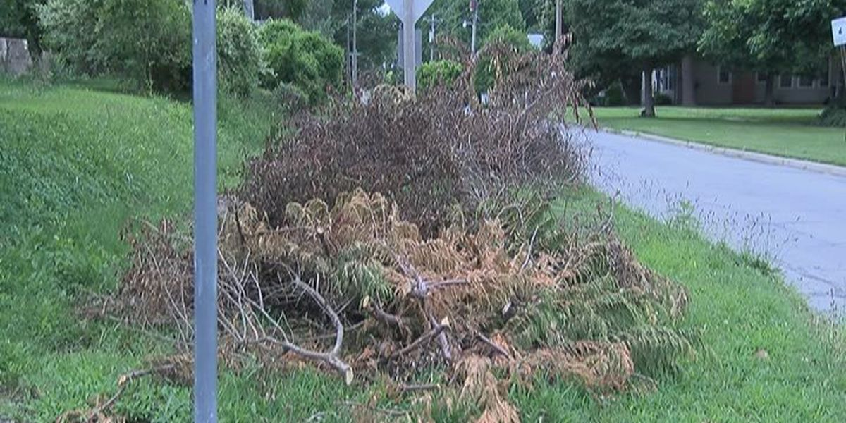 Where we are now: Storm debris cleanup