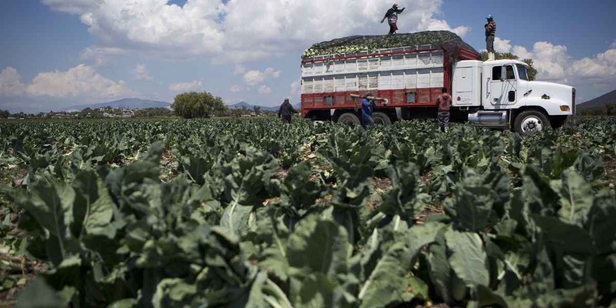 Same farm where romaine E. coli outbreak may have started issues recalls for other vegetables