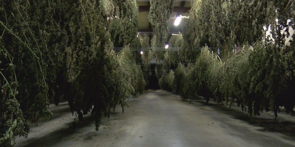 Missouri Industrial Hemp Program establishes path forward for 2020 growing season