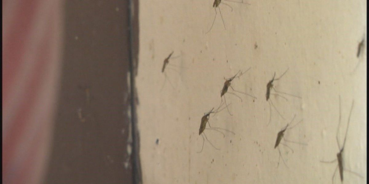 Mosquitoes pester as officials prepare for summer