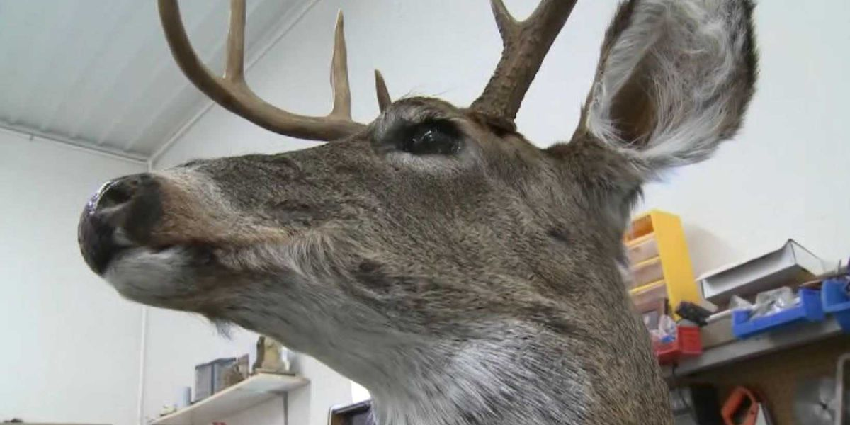 Robotic deer built to catch poachers