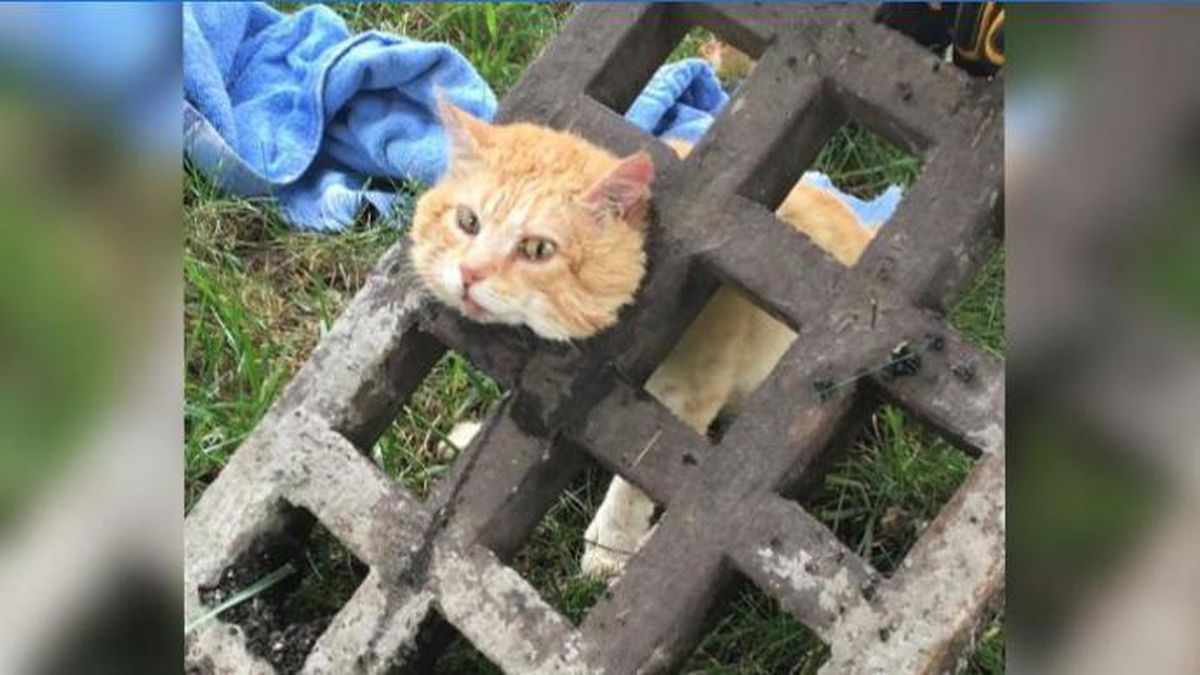 Emergency crews in Virginia use dish soap, oil to rescue cat with head stuck in a grate